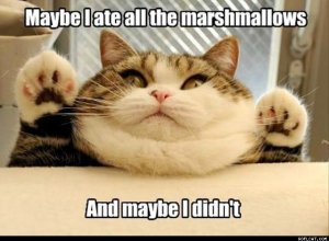 Maybe_I_Ate_All_The_Marshmallows